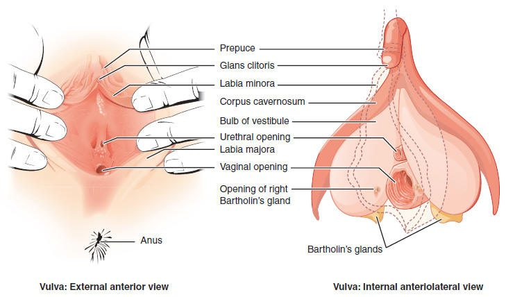 Clitoris & Entrance Image